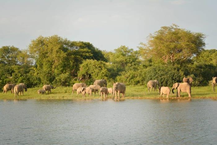 Elephants of Kala Bay