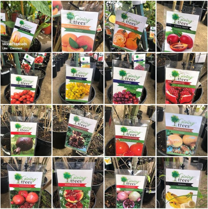 New edible fruit trees available in stock