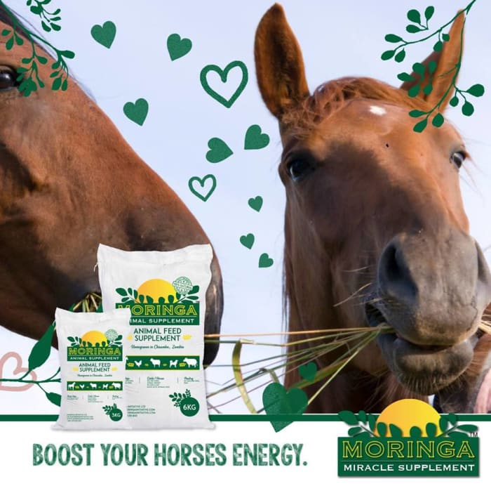 Boost your horse's energy with Moringa