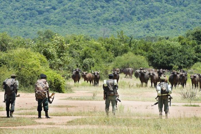 Conservation Lower Zambezi February newsletter