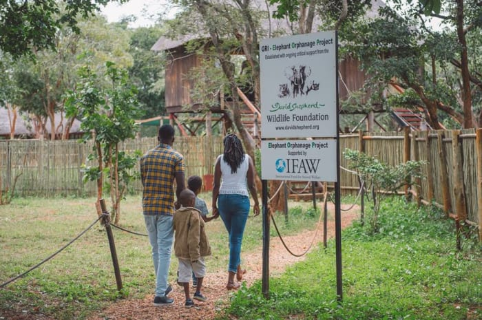 Behind the scenes tour of the Lilayi Elephant Nursery