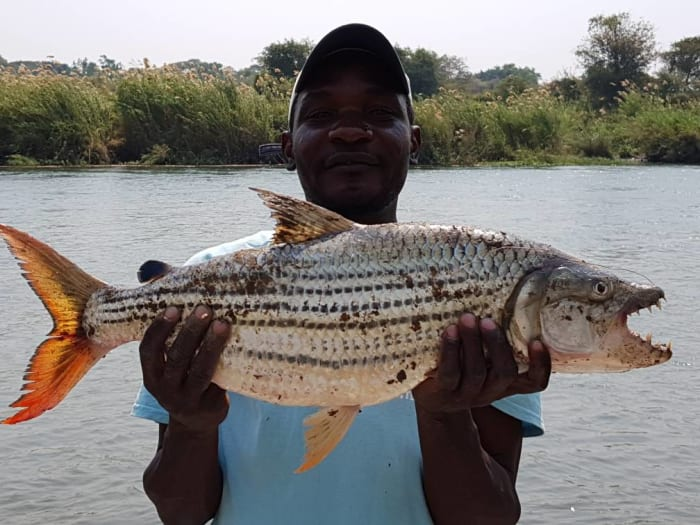 Fish for tiger fish, bream, vundu, nkupi, catfish, and African pike