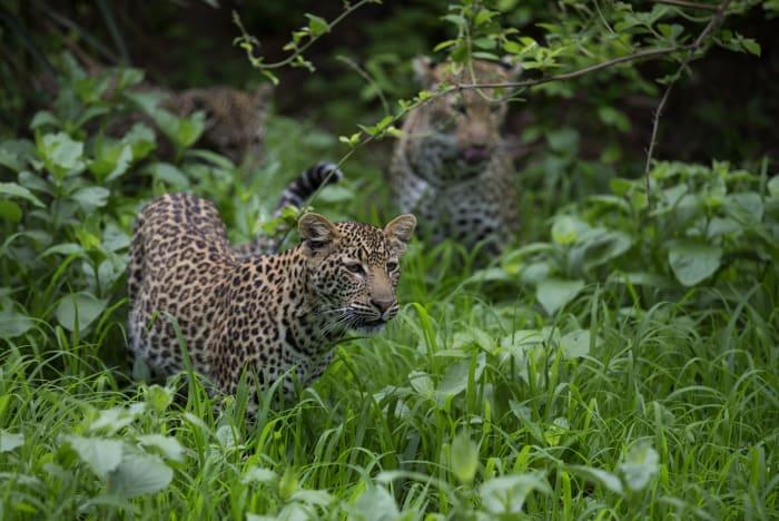 Armchair Safari