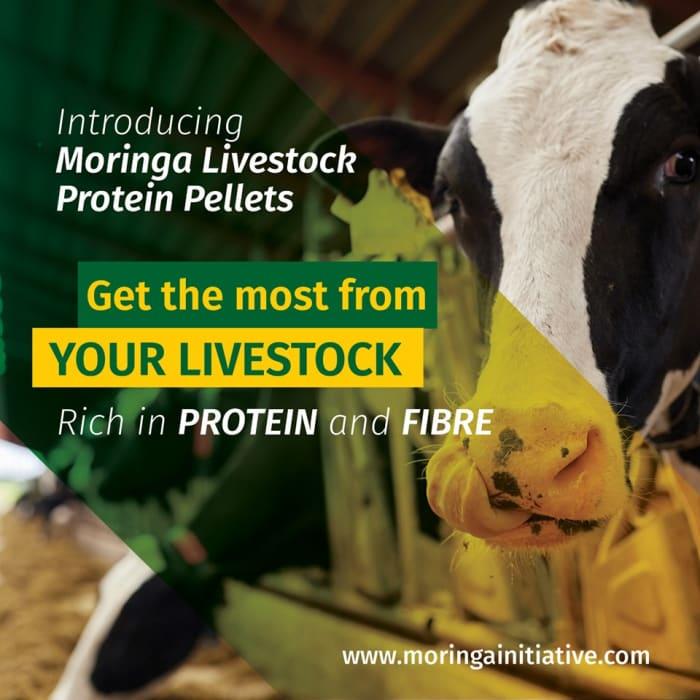New product alert! Moringa livestock protein pellets