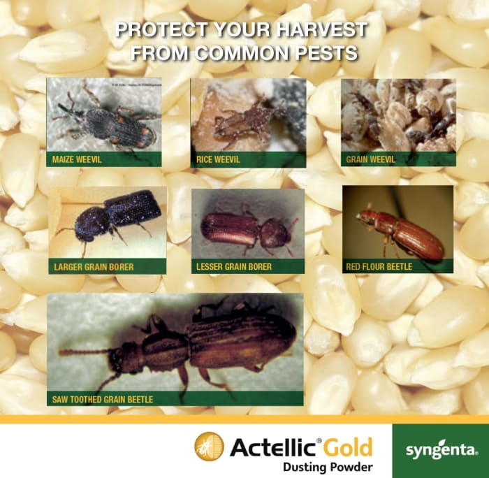 Protect your grain harvest against common pests