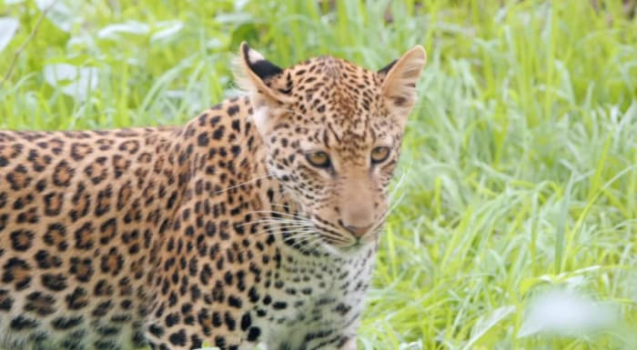 Digital diary videos by Royal Zambezi Lodge