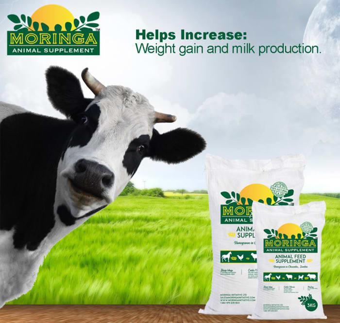 Animal feed supplements available at Livestock Services
