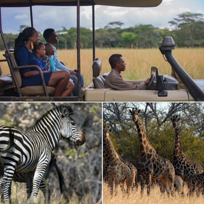 See Zambian wildlife at Lilayi farm