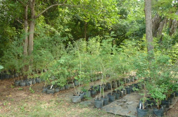 Chunyu Tree Nursery