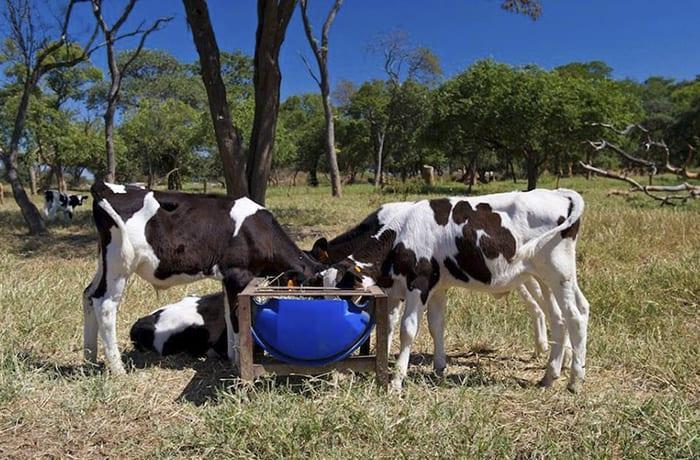 Livestock - 2