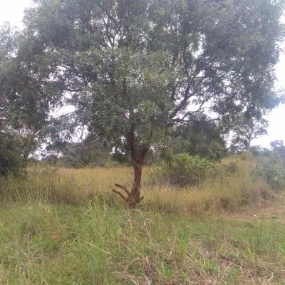 105 hectare farm vacant land for sale in Kapiri Mposhi (Zambia) image