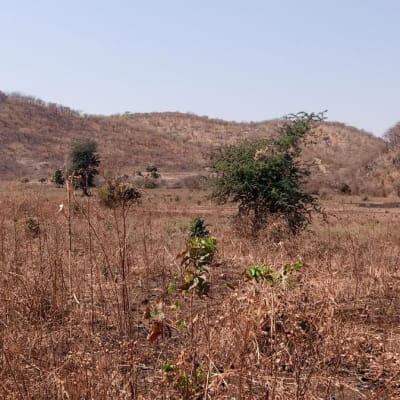 13334 m² vacant land for sale in Chilanga (Zambia) image