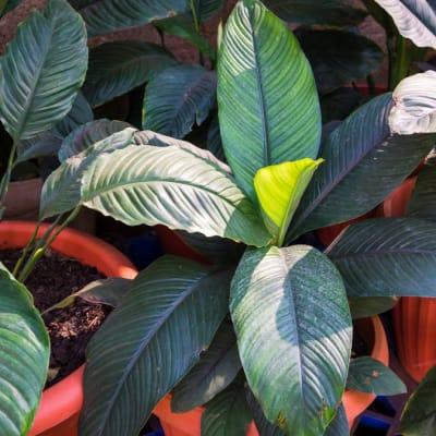 Plant 17 image