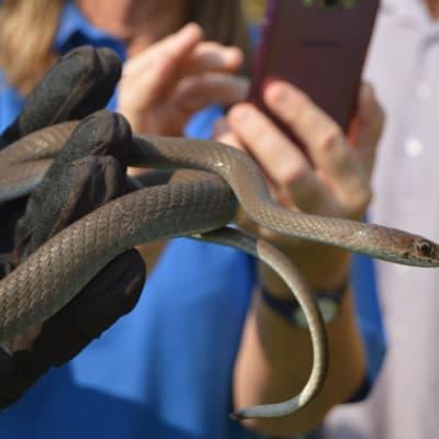 Basic Snake Handling  image
