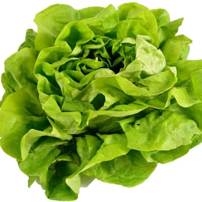 Lettuce Butterhead Salad Greens image