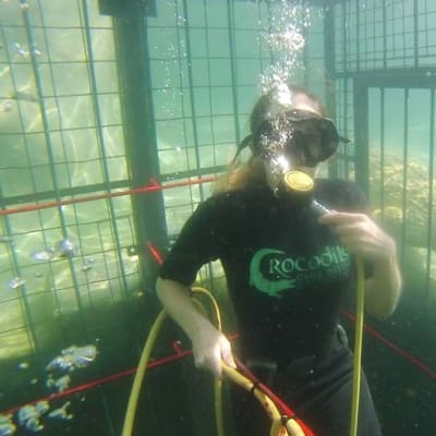 Crocodile Cage Dive image