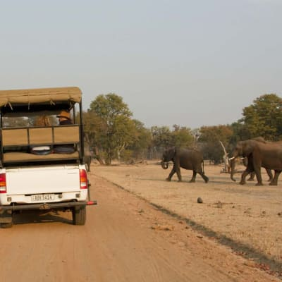 Mosi-oa-Tunya National Park Game Drive image