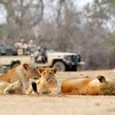 Chiawa Safaris image
