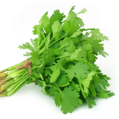 Herbs - Coriander image