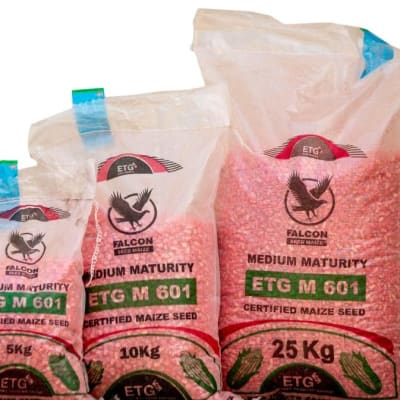 M 601 Medium Maturity Certified Maize Seed - 5kg  image