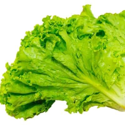 Frilly Lettuce  image