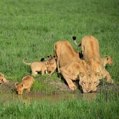 Mawimbi Bush Camp image