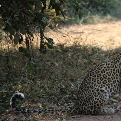 Leopard Camp Site image