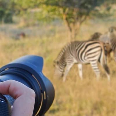Photographic Safari's image