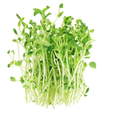 Pea  Sprouts Shoots - Salad Greens image