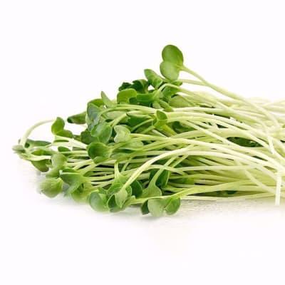 Micro-greens - Radish shoots image