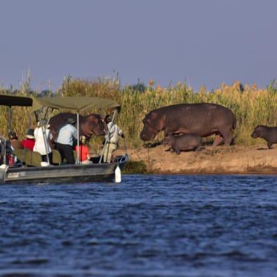 Zambezi River Safaris image