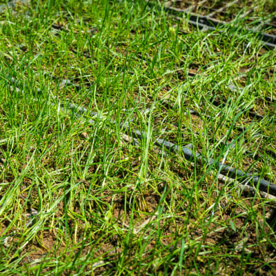 Sandy's Creations -Grass Plug image