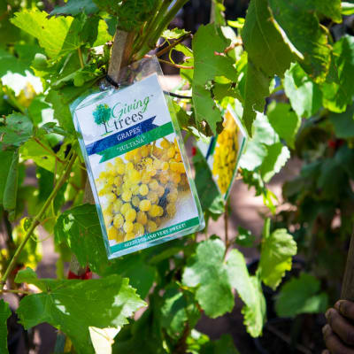 Sandy's Creations - Grape Sulatana image