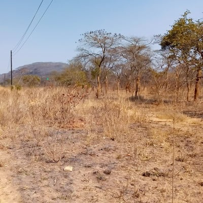 100 Acres of Vacant Farm Land For Sale In Shimabala, Lusaka Province (Zambia) image