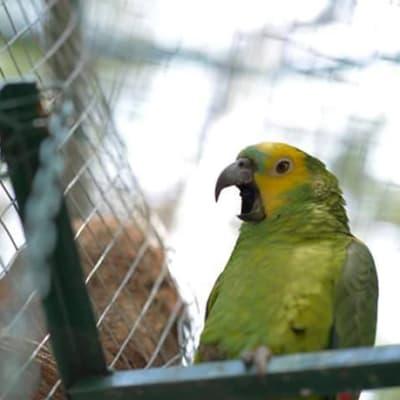 Lusaka Animal Welfare Society (LAWS) image