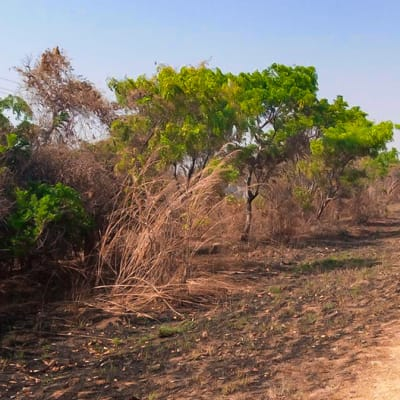 Vacant Land For Sale On State Lodge Road In Leopards Hill (Zambia) image