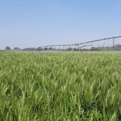 4600 Hectare Farm for Sale - Kitwe (Zambia) image