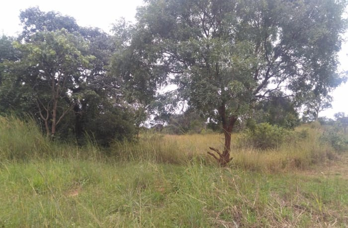 105 hectare farm vacant land for sale in Kapiri Mposhi (Zambia)
