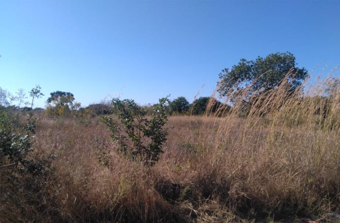 120 hectare farm vacant land for sale in Choma (Zambia)