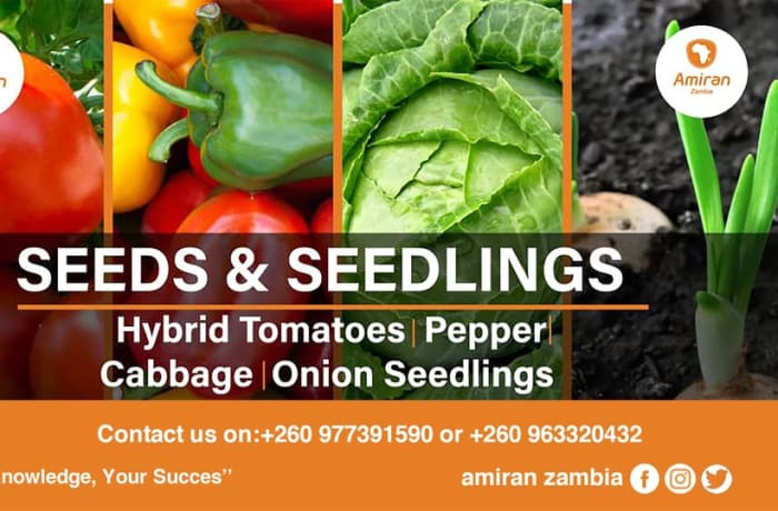 Shop for high quality seeds and seedlings for your garden image
