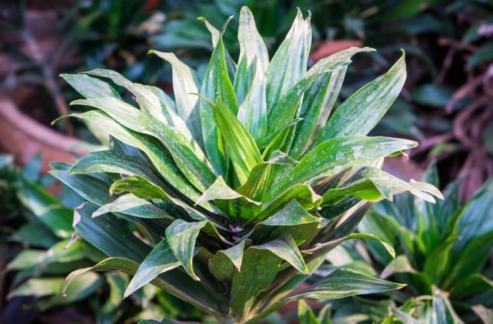 Plant 35