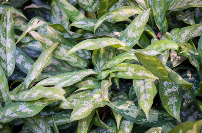 Plant 36