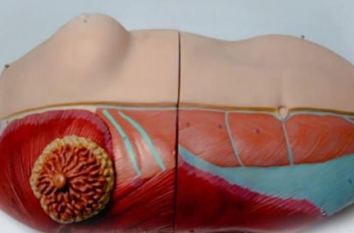 Breast examination simulator