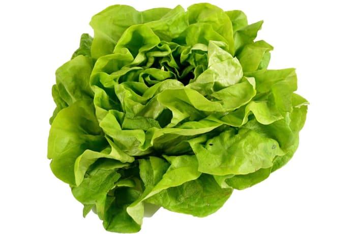Lettuce Butterhead Salad Greens