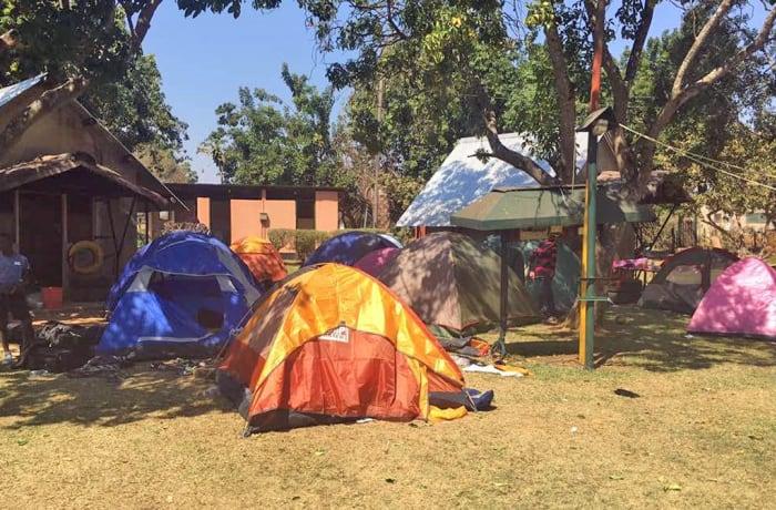 Fringilla campsite