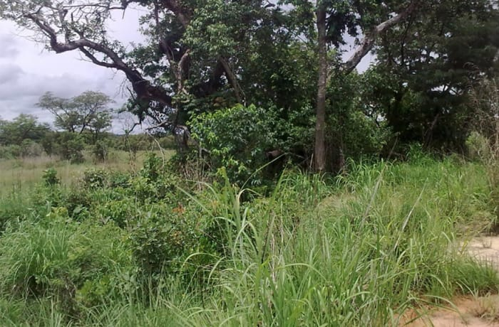 4,999Ha Vacant Land For Sale in Mansa, Luapula