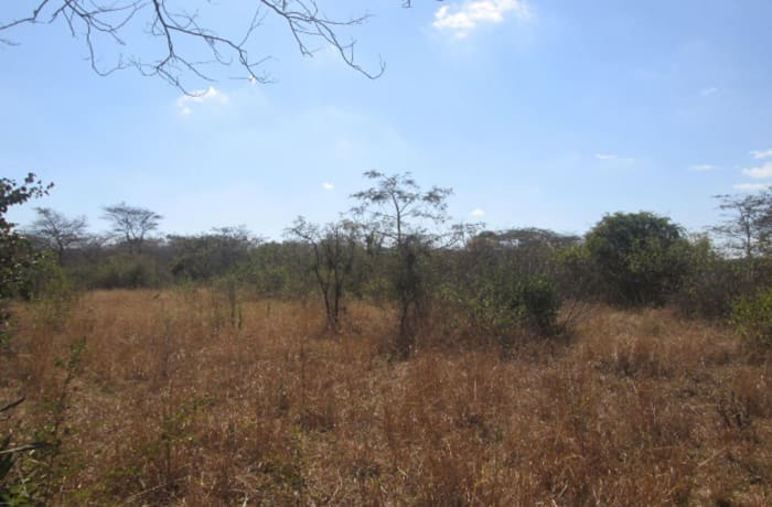 91Ha Vacant Land For Sale in Mapepe