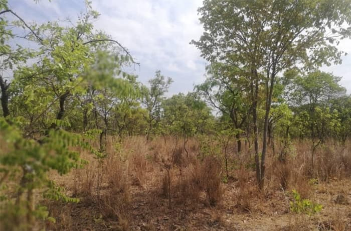 20,000 sq m Vacant Land For Sale in Shimabala, Lusaka