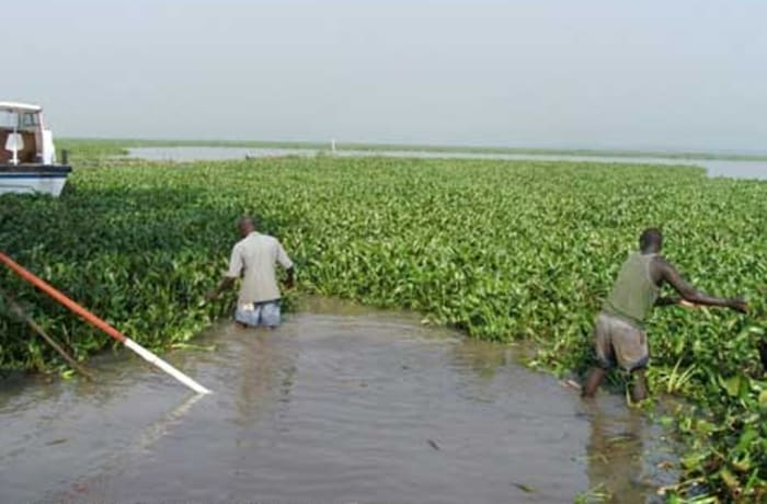 Managing Water Hyacinth and Siltation in Reservoirs