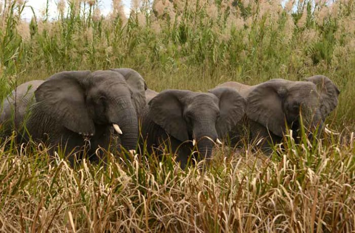 Guided game drives and safaris are arranged image